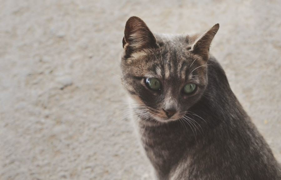 Does The City Of Midland Operate a Trap Neuter Release Program For Feral Cats?